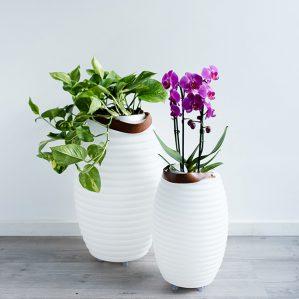 Relatiegeschenk Nikki Lampion bloemenvaas